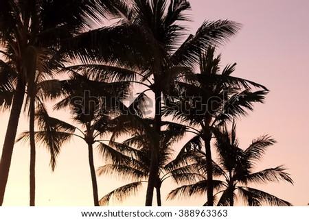 Palm trees silhouetted against a sunset background