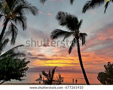 Palm trees silhouetted against dramatic sky at beach