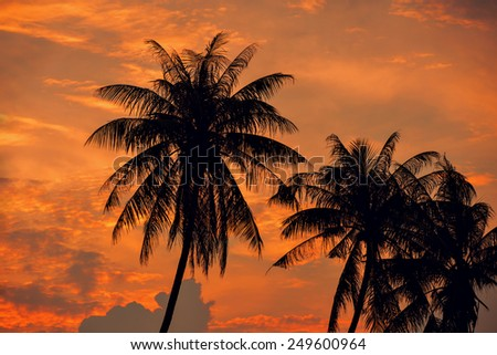 Palm Trees silhouettes on the Colorful orange Sky Sunset or Sunrise background  - stock photo