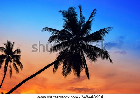 Palm Trees silhouettes on the Colorful Sky Sunset or Sunrise background  - stock photo