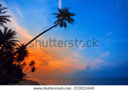 Palm Trees silhouettes on the Colorful Sky Sunset or Sunrise background. Tropical exotic landscape - stock photo