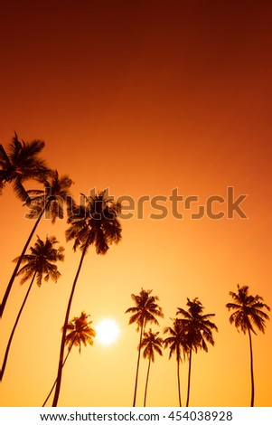 Palm trees silhouettes on tropical beach at summer warm vivid sunset time - stock photo