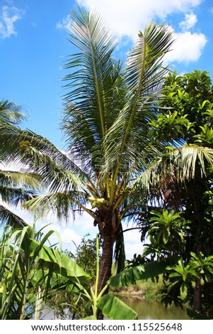 Palm trees under a blue sky in Thailand.