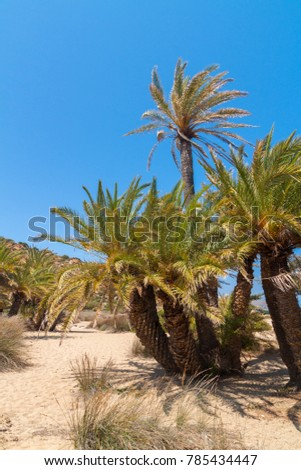 Palm trees with bananas on Crete, Greece