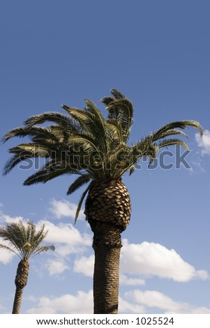 Palm Trees with Blue Skies as a Background - stock photo
