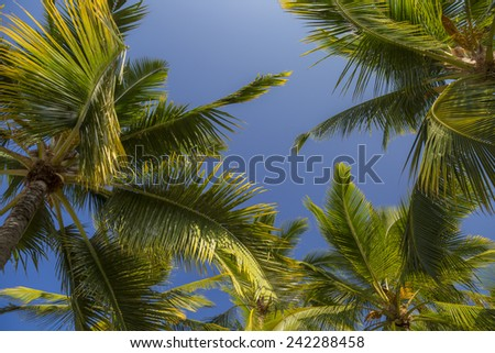 Palm trees with blue sky - stock photo
