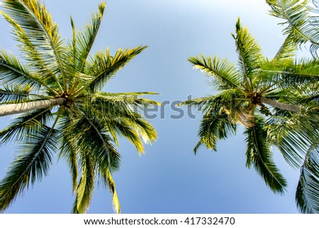 Palm Trees with Blue Sky 1 - stock photo