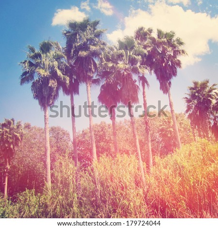 Palm trees with instagram effect - stock photo