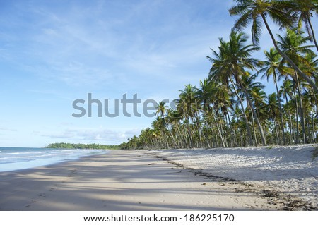 Palm trees with shadows on wide remote tropical Brazilian beach Bahia Nordeste Brazil - stock photo
