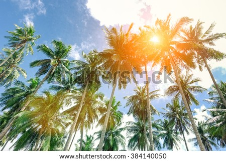 Palm trees with sun at the zenith and blue sky taken in El Nido  Palawan a Philippine attraction - Popular concept of tropical holidays -  Soft focus on top of trees due to sun halo and lens effect - stock photo