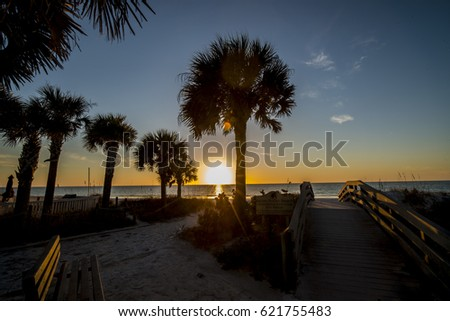palm trees with sunset over ocean
