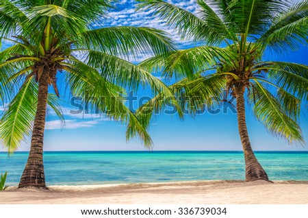 Palm tress at the exotic beach in Dominican Republic - stock photo