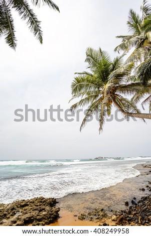 Palm tropical beach. landscape rocky coast ocean. - stock photo