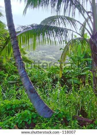Palm view - stock photo