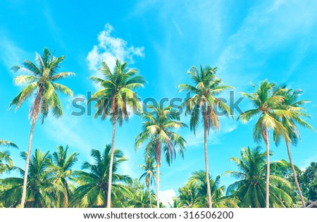 Palm with coconut palm trees under blue sky. - stock photo