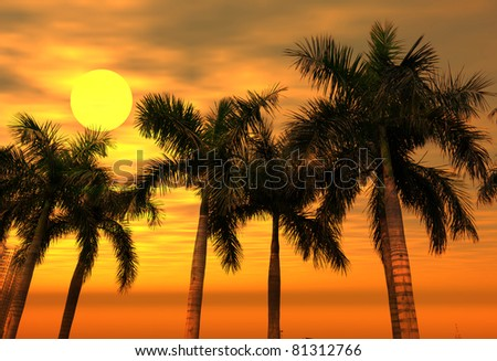 palm with sunset - stock photo