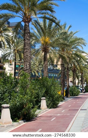 PALMA DE MALLORCA, SPAIN - APRIL 19, 2015: Bike track along the Paseo Maritimo with palm trees on a sunny spring day on April 19, 2015 in Palma de Mallorca, Balearic islands, Spain.