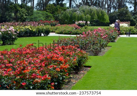 PALMERSTON NORTH, NZL - NOV 29 2014:Visitors in Dugald MacKenzie Rose Garden.It was opened in 1968 and contains over 5000 roses in named beds. - stock photo