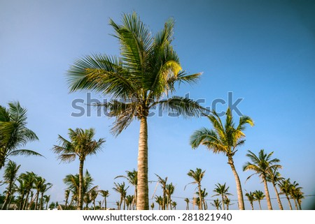 Palms against blue sky on a beach - stock photo