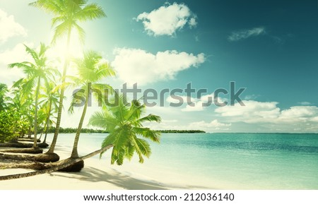 palms and Caribbean beach - stock photo