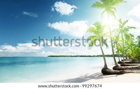 palms and Caribbean beach - stock photo