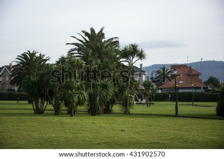 Palms and house