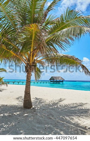 palms and mangrove trees on sand beach - stock photo