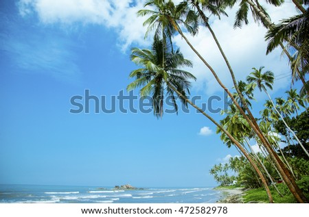 Palms and ocean  with blue sky background