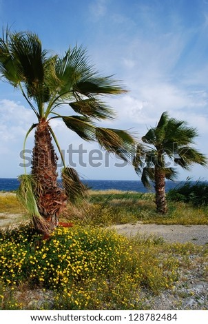 Palms and sea, italian riviera landscape, San Remo, Liguria, Italy - stock photo