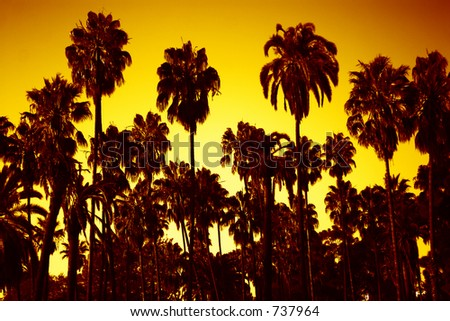 palms at night - stock photo