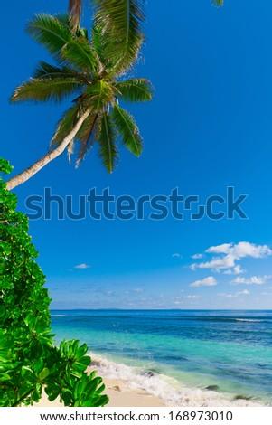 Palms Bay Summertime  - stock photo