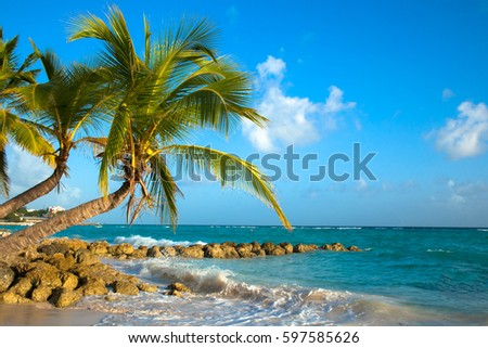 stock-photo-palms-bent-on-the-shore-of-t