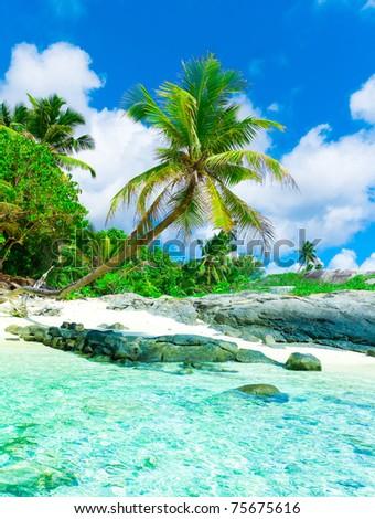 Palms Eden Sea - stock photo