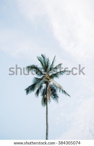 Palms in Bali, Indonesia - stock photo