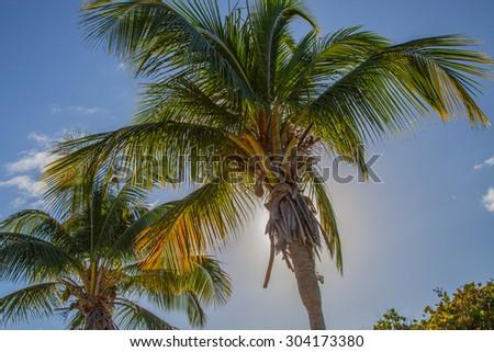 Palms in the Sun, Fajardo, Puerto Rico - stock photo