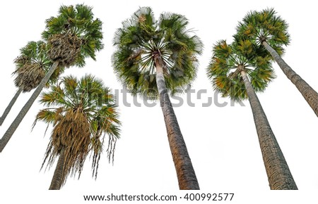 palms isolated on white