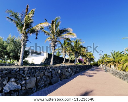 Palms, Lanzarote, Canary Islands, Spain