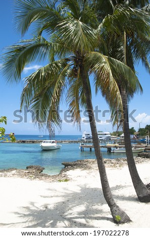 Palms leaving shadows in George Town beach on Grand Cayman island (Cayman Islands). - stock photo