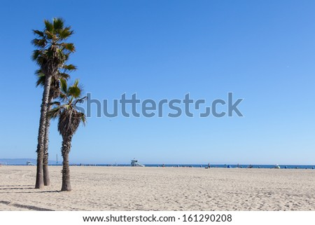 Palms on Santa Monica Beach - Los Angeles - during a sunny day with a perfect blue sky - stock photo