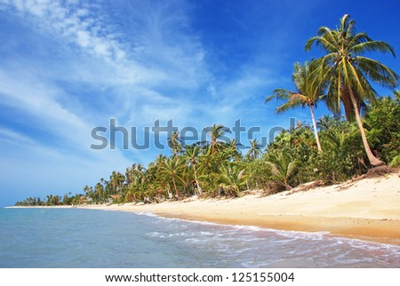 Palms on the beach, Ko Samui island, Thailand - stock photo