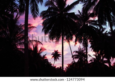 Palms on the beauty sunset sky background - stock photo