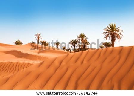 Palms on the desert - stock photo
