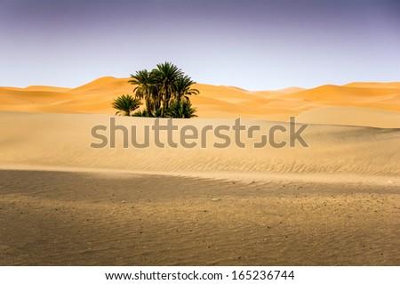 Palms on the desert, Merzouga, Morocco - stock photo