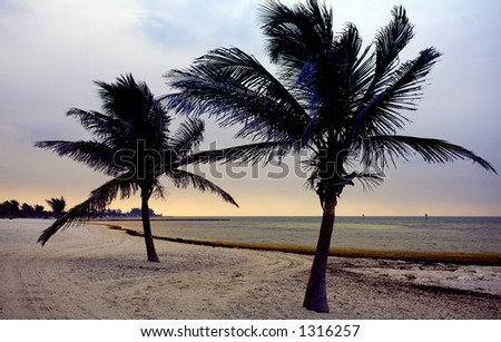 Palms on the golden beach