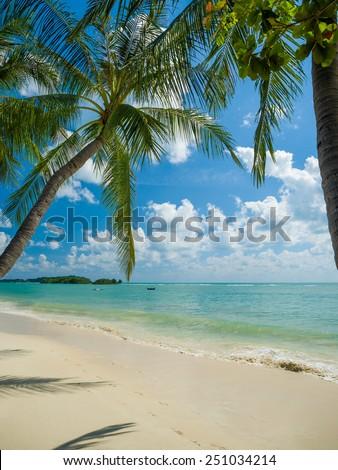 Palms on the Koh Samui beach, Thailand - stock photo