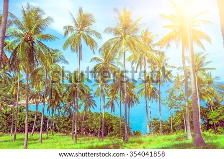 Palms on the sandy beach - stock photo