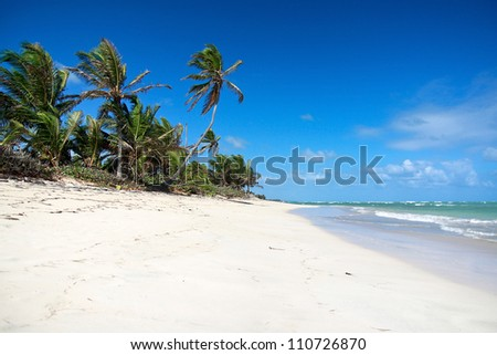 Palms on tropical beach, caribbean paradise