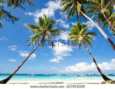 Palms on tropical beach, Philippines, Boracay - stock photo