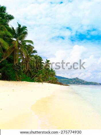 Palms Panorama Sea  - stock photo