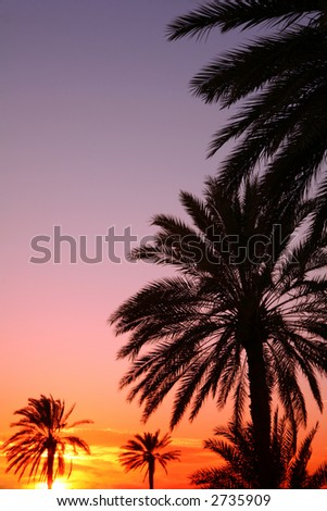 Palms silhouetted against an Arabian sunset. - stock photo
